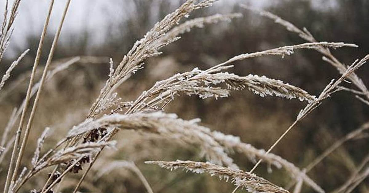 Options for Unharvested Crops